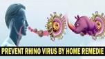 Rainovirus