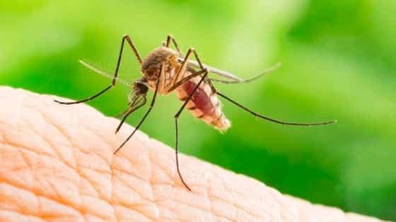 Zika Virus Treatment In Hindi