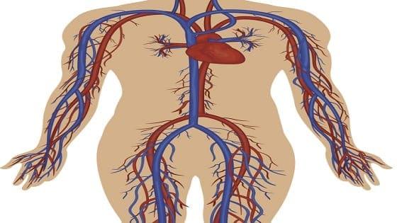 पेरिफेरल वैस्क्युलर रोग